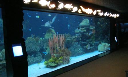 Hammerhead International Aquatic Habitats